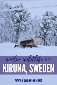 Kiruna, Sweden is a beautiful stop for visitors to the Arctic Circle. Here's our guide to the city, including what to do, see and taste while you're there, how to get there and where to stay.