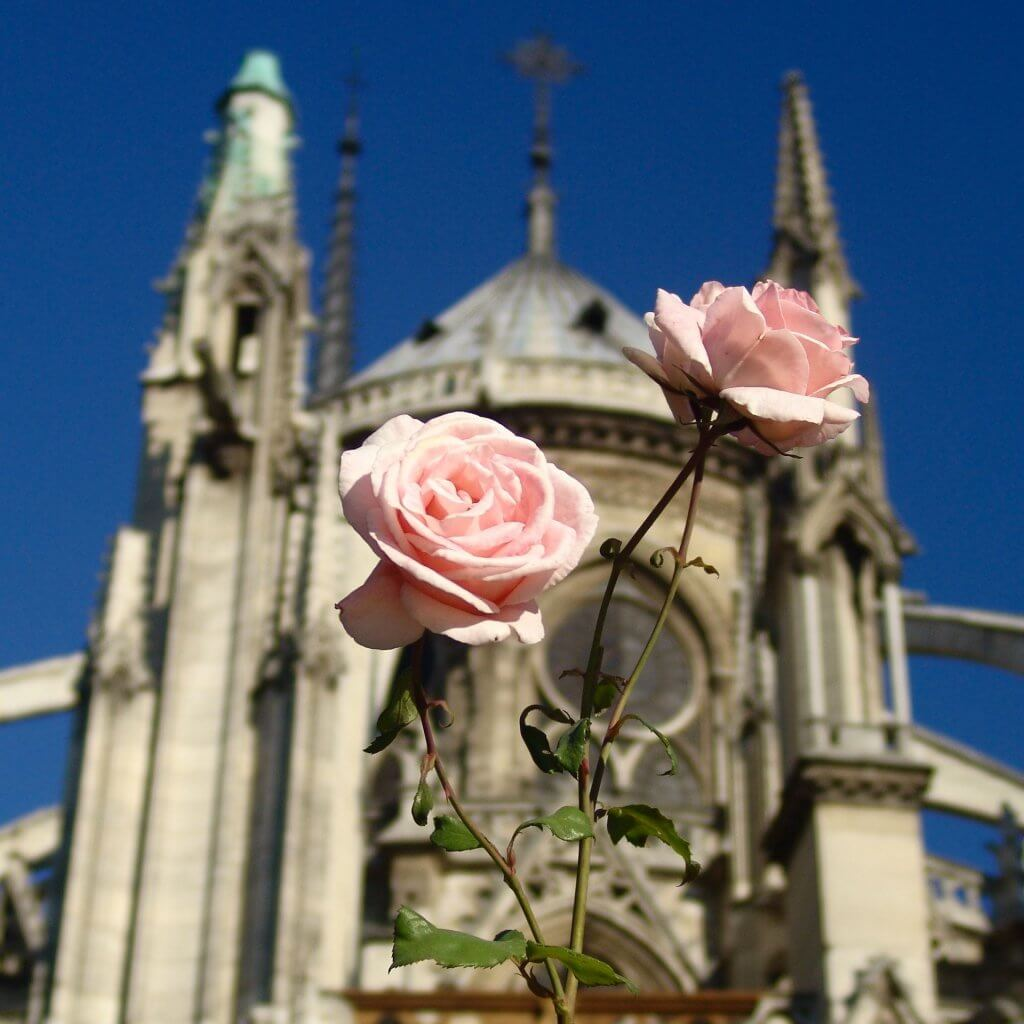 Notre Dame behind two pink roses (Wendy)