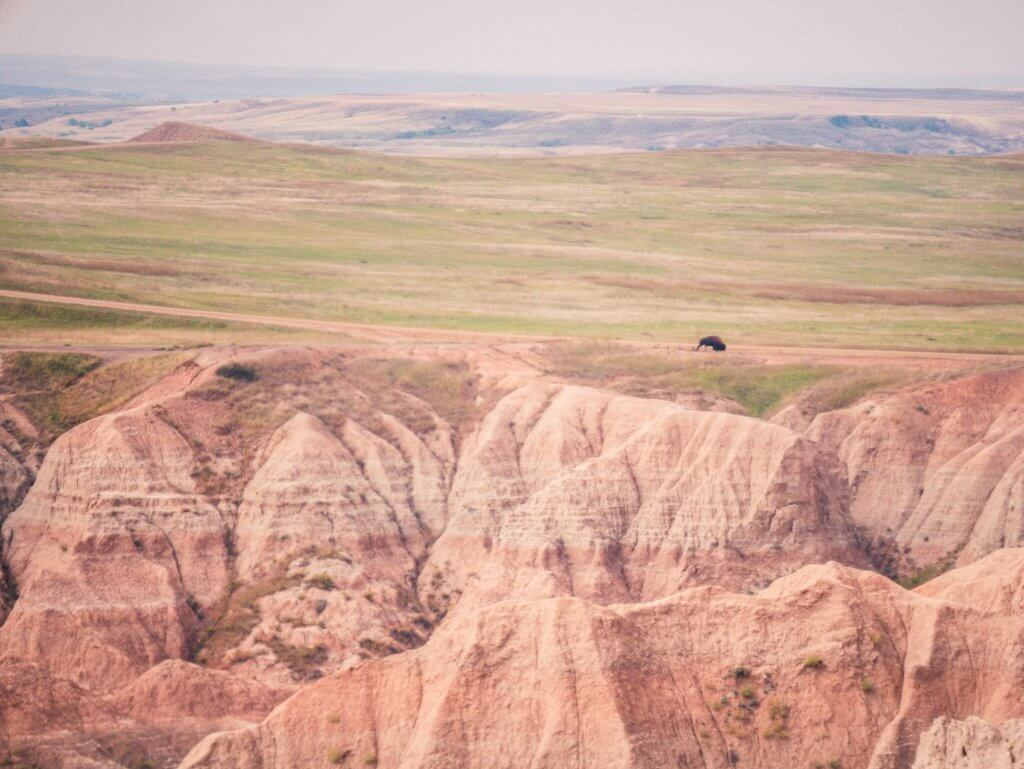 View of bison from a distance at Badlands National Park, near a colorful cliff with green grasslands.