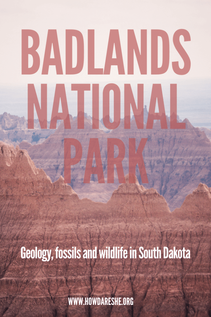 Badlands National Park, South Dakota is one of the most distinct parks in the US. Located in the middle of the Northern Great Plains, the Badlands' 244,000 acres of landscapes include interesting rock formations and grasslands, wildlife, fossils and storied human history. #badlands #southdakota #nationalpark #nps #badlandsnationalpark #greatplains #dakota #wildlife
