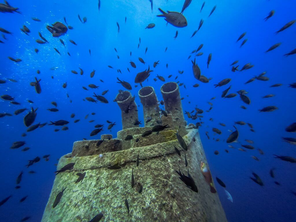 School of fish surrounding wreck dive in Malta