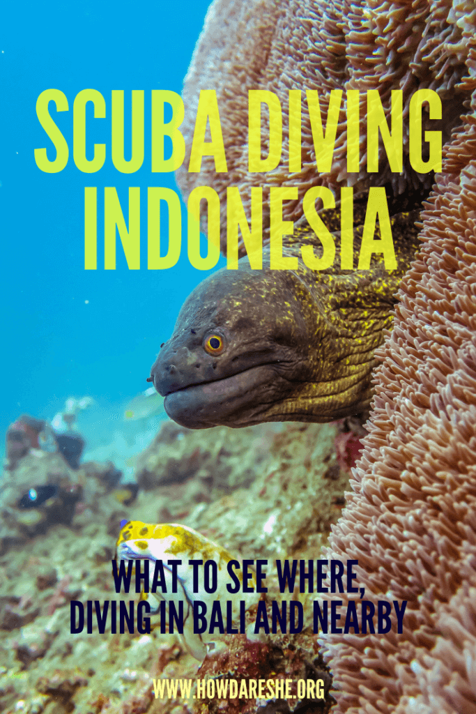 "Text ""scuba diving indonesia what to see where, diving bli and nearby"" overlayed on underwater image of rocks with eel head poking out"